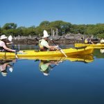 Myall River Guided Kayak Tour