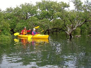 Father and daughter kayaking in mangroves