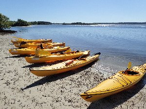 Yellow kayaks on beach