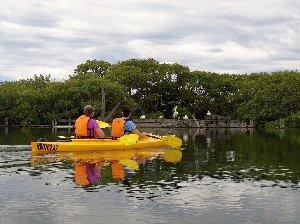 Couple kayaking looking at birds